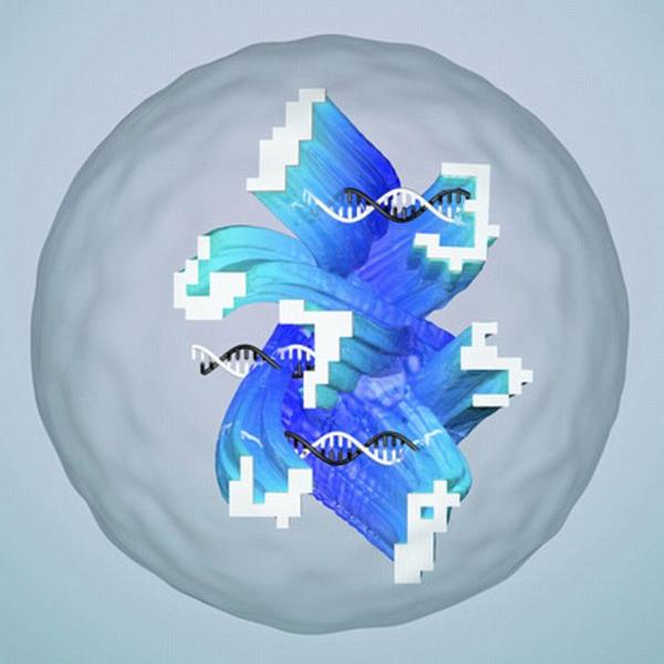 DNA组成的AI人工神经网络已出世